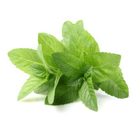 Mint Fresh (Bunch)